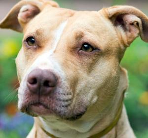 Hundehalter-Haftpflicht