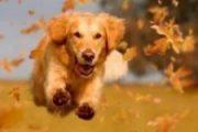 hundehalterhaftplfichtversicherung